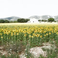 """""""Toscanasonne"""", 100x70 cm"""