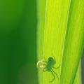 l'ombra del ragno