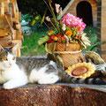Kitty die Hausdame