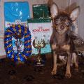 на моно ПК (победитель клуба) Бантик стал Лучшим Юниором, Юным Победителем Клуба