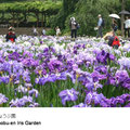 5月下旬から6月下旬まで14万株の菖蒲が咲きます。期間中は菅笠に紺絣をまとった花摘娘(はなつみめ)が咲き終えた花の摘み取りも見せます。
