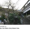 エスカレーターなどがない、昔ながらの階段の駅です。春には階段脇の桜が見事に咲きます。