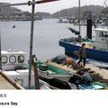 奥まった入江で、台風の時は久里浜などから漁船が避難してきます。大鍋で茹でたわかめを漁港前に干す風景は寒の頃の風物詩。