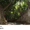 高坂小学校の前から吉井に抜ける浦賀道は浦賀奉行所が保護した林の中を通っています。車も余り通らない静かな散策路です。