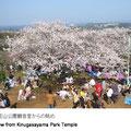 周囲に緑が多く残り、ここから望む富士山、丹沢、伊豆大島、横浜、川崎方面の景観をすばらしい眺めとしています。春は桜が見事です。