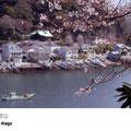 愛宕山から見る浦賀港は、春は桜、秋は対岸の紅葉が見事。勝海舟に縁のある東叶神社の全景も眺められます。