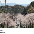 1.8キロの両側に桜並木が続き、4月の桜のシーズンは桜見物の好スポットです。