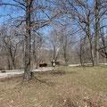 Campground im Pere Marquette State Park