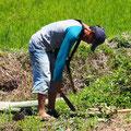 Kleinbauer auf dem fruchtbaren Land bei Ranolewo.