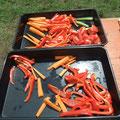 Immer frisches Gemüse