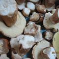 Cèpes de l'Aveyron