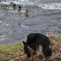 Genna würdigt die Wasservögel keines Blickes...
