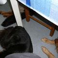 Alle drei liegen dicht beieinander unter dem Esstisch - wer hätte das gedacht (ich nicht...)?