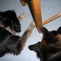 Auch Toka, die sonst gerne für eine gewisse Distanz sorgt, hat sich mit Gennas Nähe abgefunden!