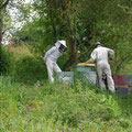 mise en place des ruches