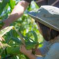 収穫体験の想い出にも、Paccoのロケーション撮影にお任せ下さい。