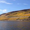 Blick von Bingen auf die Rüdesheimer Weinbergslagen - Danke an das kleine Rieslinggut für diese tolle Aufnahme