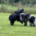 Biina und Iggy in action