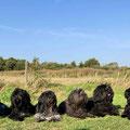 Doezenfreunde - v.l.n.r. Cooper, Camille, Jane, Alysha, Thijs, Alwine