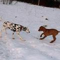Прогулка в лес - Дирк и Лилу