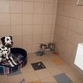 Гостиница для собак (на сайте есть отзыв владельцев!)