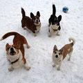 Веселая семейка - Люка, Тихон, Санни и Ёжик