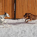 Далматин.ру - передержка собак