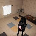 Гостиница для собак. Новое фото Геры.