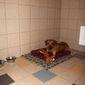 """Роня в гостинице для собак """"Далматин.ру"""""""