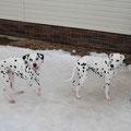 Долли и Лилуша (на сайте есть отзыв владельцев!)