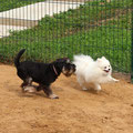 Микки и Бася