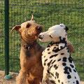 Каспи и Лилу