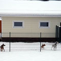 """Вюша с Трофимом, Кика и Лилу увидели кошку! (Гостиница для собак """"Далматин.ру"""")"""