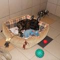 Гостиница для собак. Тайсон (на сайте есть отзыв владельца)