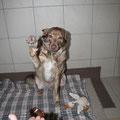 """Потапка, дай лапку! (Гостиница для собак """"Далматин.ру"""")"""