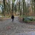 Durch den Riedlewald
