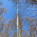Dieser schöne Baum wacht über Georg