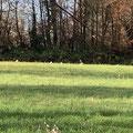 Reiher auf der Hüniwiese