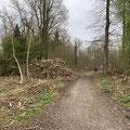 im Wald bei Raderach