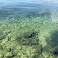 Wanderung Fischbach, klarer Bodensee