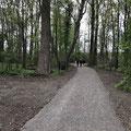 Weg zur neuen Aussichtsplattform am Romanshorner Strand, Naturschutzgebiet