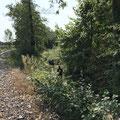 Hinunter in Fischbach's Hinterland Dschungel