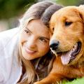 informiertes Halsband für Hunde