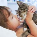 informiertes Halsband für Katze
