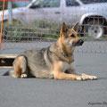 Unterordnung Hund