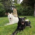 Hundeschule Mattersburg