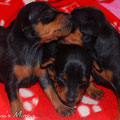 Unsere THREE BLACK