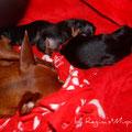 Mini und die Babies 16 Tage