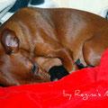 Mini ist müde und schläft mit den Babies.