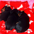 Unsere DREI Billie Boy, Batman, Beatrice